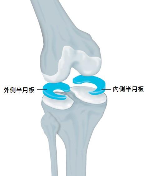 function_meniscus